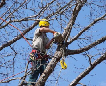 Featured of Tree Pruning and Trimming