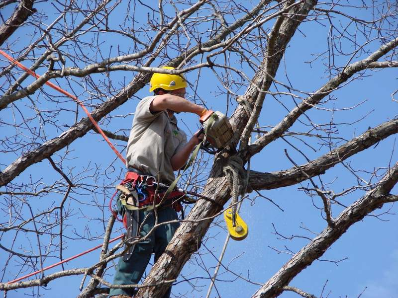 Tree Pruning and Trimming: An Integral Part of Professional Tree Care in Australia