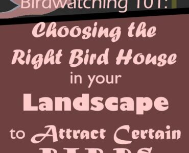Featured of Birdwatching 101 - Choosing the Right Bird House in Your Landscape to Attract Certain Birds