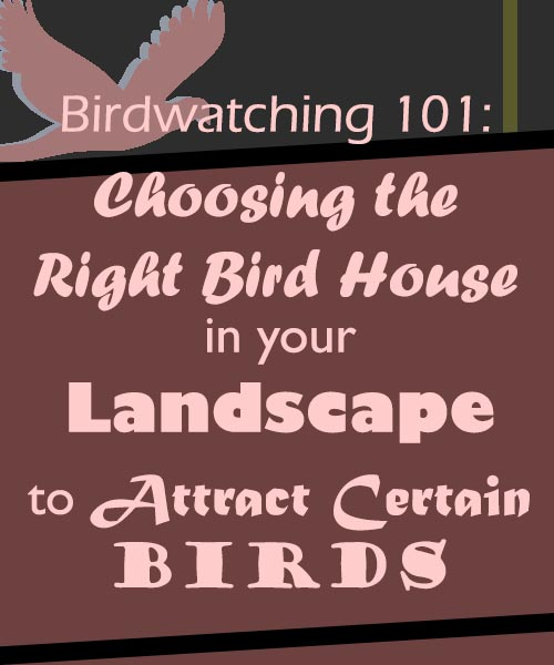 Birdwatching 101 - Choosing the Right Bird House in Your Landscape to Attract Certain Birds