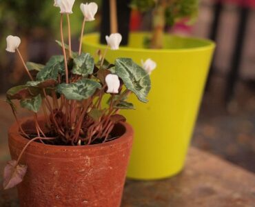 Featured of How to Keep Outdoor Potted Plants From Falling Over