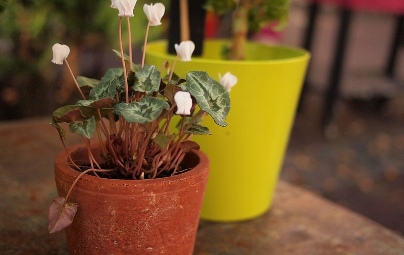 How to Keep Potted Plants From Falling Over When It is Windy