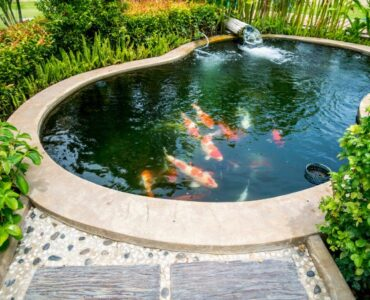 Featured of How to Maintain a Healthy Fish Pond
