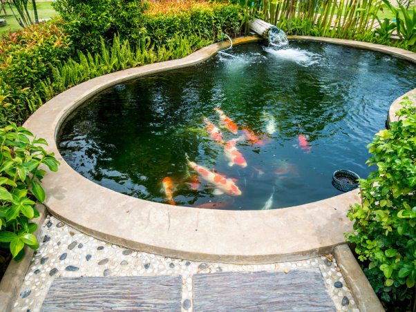Aeration Advantages - How to Maintain a Healthy Fish Pond