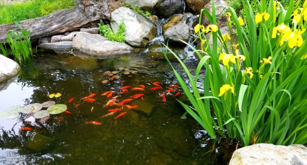 Fountain Filtration - How to Maintain a Healthy Fish Pond