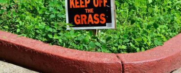 Featured of Important Steps to Winterize Your Lawn Care and Landscaping