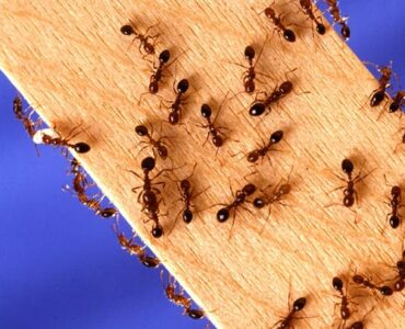 Featured of Why Should You Consider the Benefits of Professional Pest Control