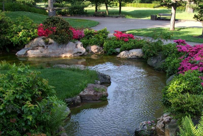 5 Things to Consider When Setting Up a Garden Pond