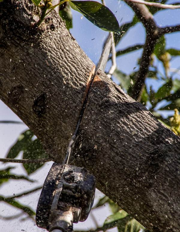 Five Ways You Can Reduce the Cost of Tree Removal
