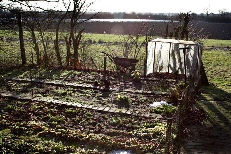 Grow Vegetables During the Winter Season