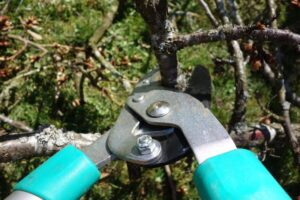 Featured of How to Prune Plants Tutorial for the Eager Gardener