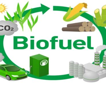 Featured of 8 Top Sources of Biofuel