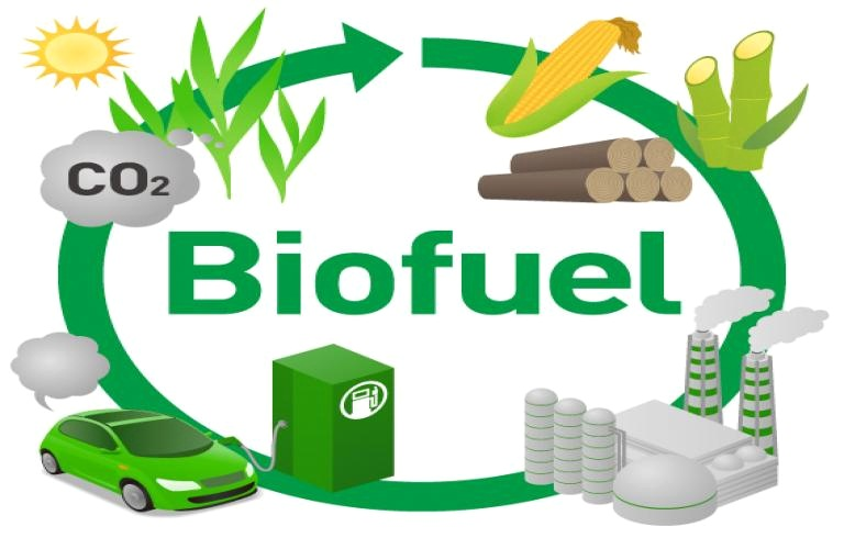 Top Sources of Biofuel