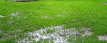 Featured of Exactly How to Get Rid of Standing Water in Your Lawn
