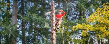Featured of Tree Service Company