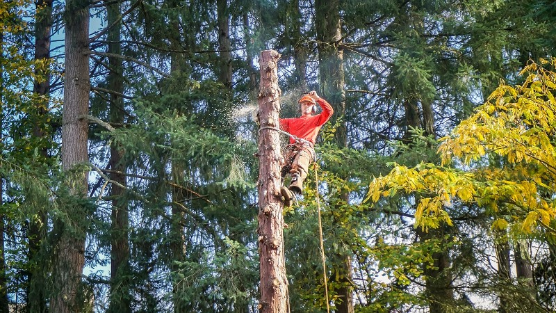 Hiring a Tree Service May Prove to be a Stress-Free Experience for You