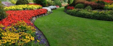 Featured of 5 Basic Lawn Care and Maintenance Tips