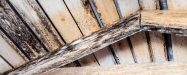 Featured of How to Prevent Wood Rot