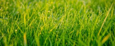 Featured of Choosing the best grass seed for your lawn