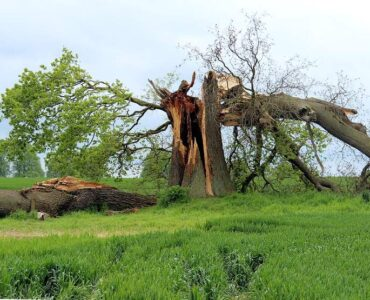 Featured of Caring for Storm Damaged Trees