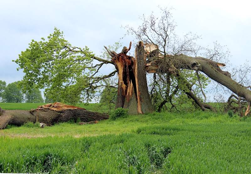 Caring for Storm Damaged Trees