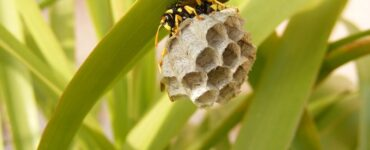 Featured of Removal of Wasp Nests