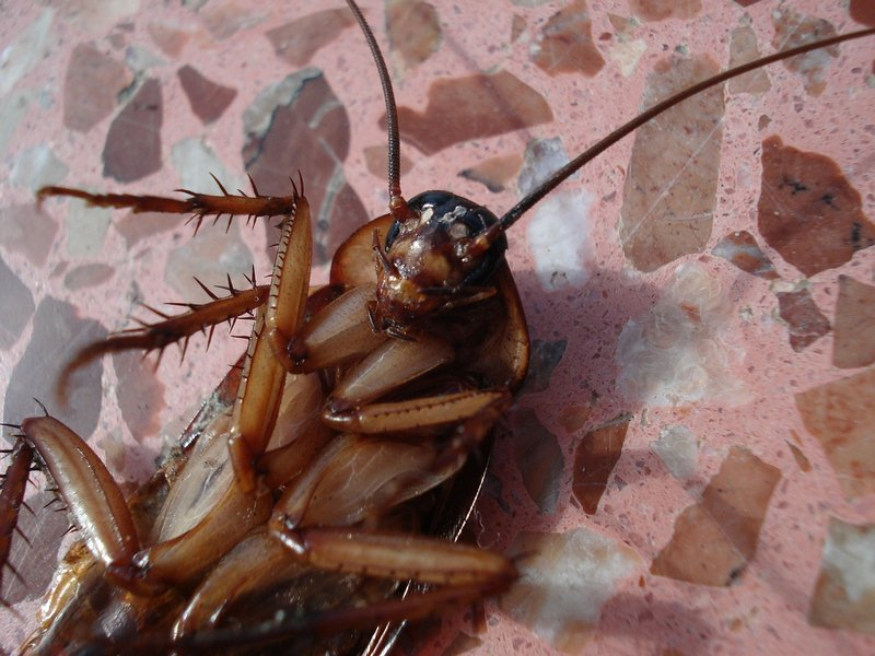 The Relevance of Cockroach Removal Services for Your Home