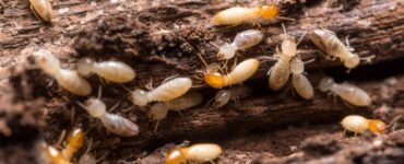Featured image - Termite Prevention Tips