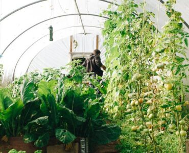 Featured image - Greenhouse Gardening - Getting Started, Planning and Preparation