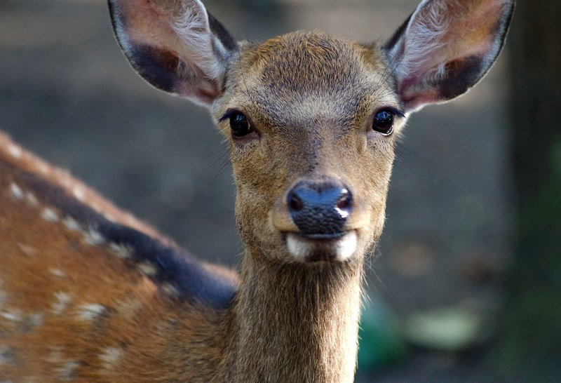 image - Smart Tricks and Tips to Keep Deer Out of Your Yard and Garden Space