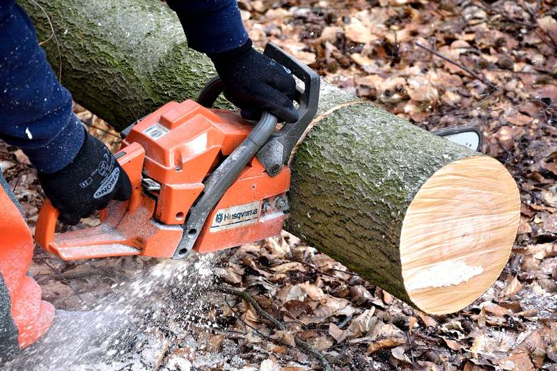 image - 5 Things to Consider Before Choosing an Electrical Chainsaw