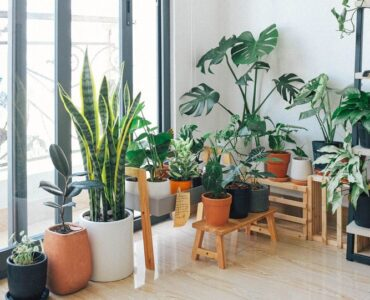 Featured image - Amazing Indoor Plant Decor Ideas