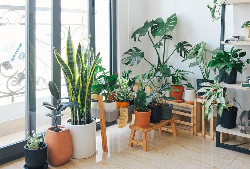image - Amazing Indoor Plant Decor Ideas
