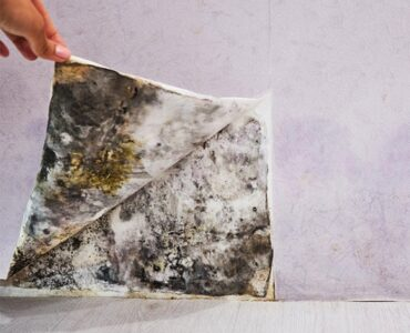 Featured image - How to Recognize if You Have Mold in Your Home
