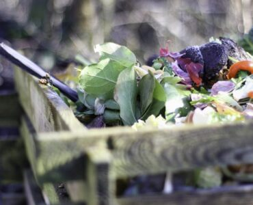 Featured image - How to Start a Composting Heap in Your Garden