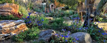 Featured image - Garden in Rock Style - Main Peculiarities