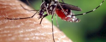 Featured image - How to Get Rid of Mosquitoes Without Harmful Chemicals