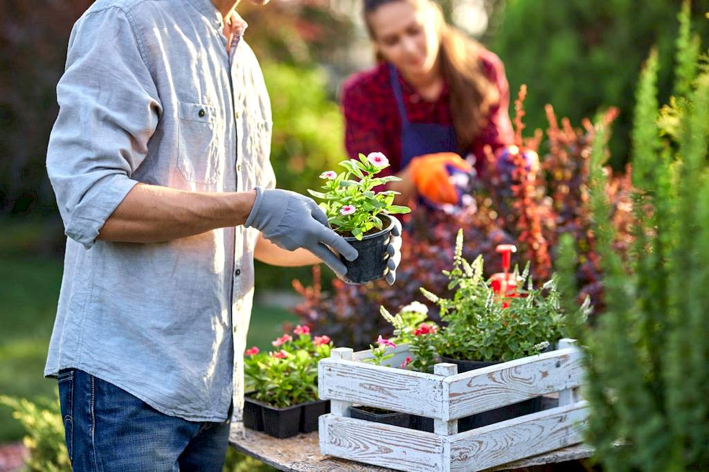 image - New to Gardening - 7 Tips to Start the Perfect Garden