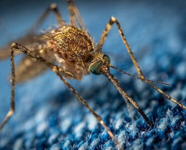 Featured image - How to Get Rid of Mosquitoes In (And Outside) Your House