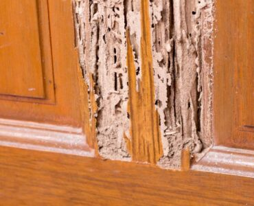 Featured image - How to Tell If You Have Termites in Your Home