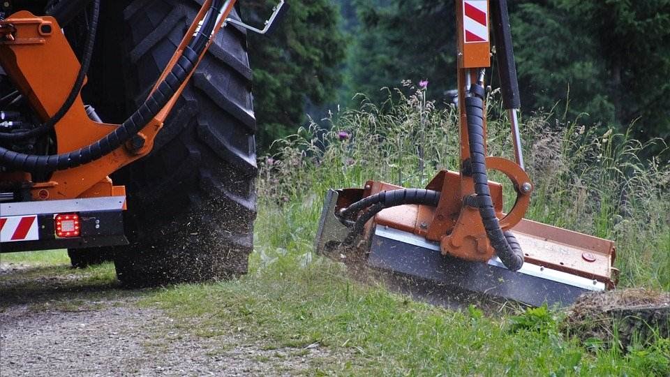 image - Oklahoma City Weed Control Tips for Your Lawn