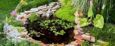 Featured image - 3 Ways to Decorate a Pond to Make a Big Splash