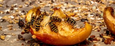 Featured image - How to Keep Wasps Out of Your Yard This Summer