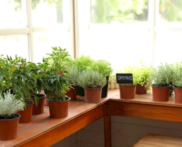 Featured image - How to Grow an Indoor Garden or Farm: A Simple Guide