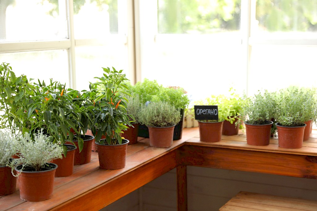 image - How to Grow an Indoor Garden or Farm: A Simple Guide