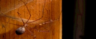 Featured image - How to Keep Spiders Out of Your Wardrobe