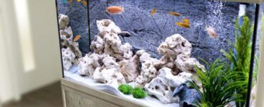 Featured image - How to Set Up an Aquarium in Your Home: A Helpful Guide