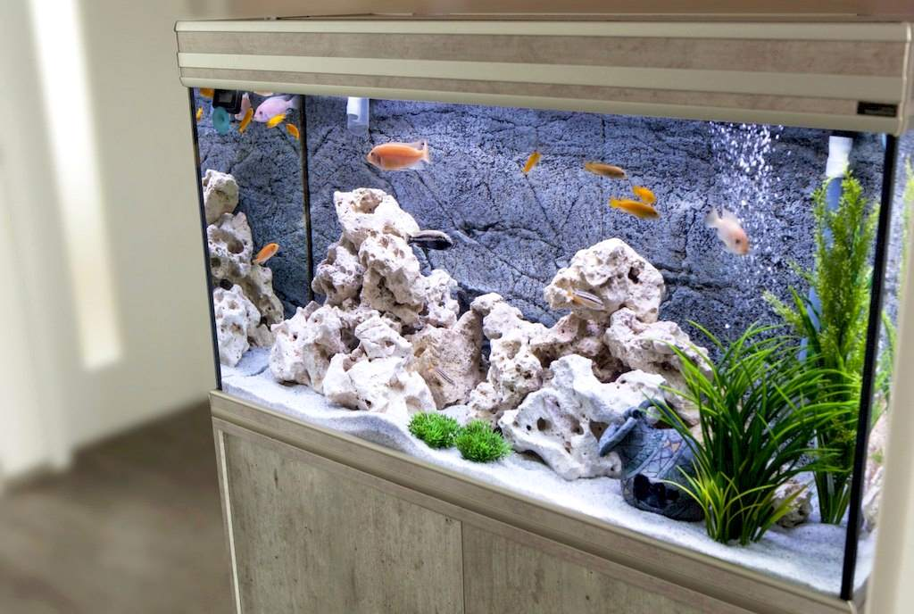 image - How to Set Up an Aquarium in Your Home: A Helpful Guide