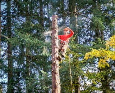 Featured image - The Importance of Professional Tree Care Services