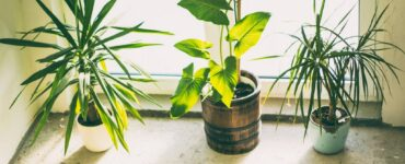 Featured image - 5 Tips for Keeping Apartment Plants Healthy All Year Long